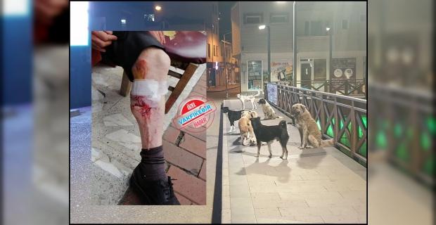 Vakfıkebir de sokak köpekleri  dehşet  saçtı