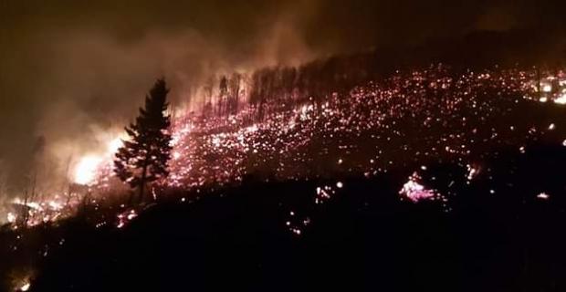 Trabzon da orman yangını
