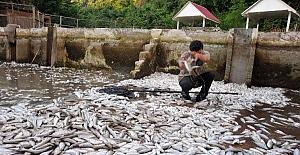 Vakfıkebir de 150 bin balık telef oldu